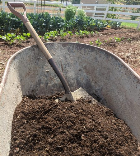 Building Soil Fertility